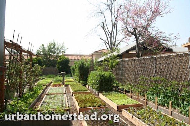 horta para interna