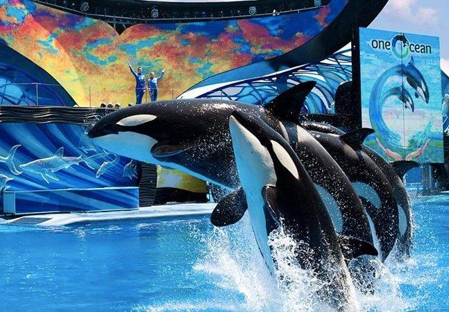 Ex-treinador do SeaWorld revela que as baleias são drogadas diariamente para entreter as pessoas