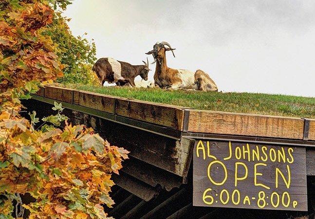 O restaurante que está fazendo sucesso por criar cabras no telhado