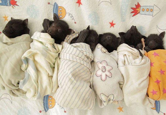 Clínica na Austrália funciona como um orfanato para bebês morcegos