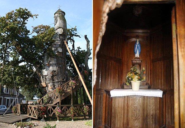A resistente árvore de 800 anos que tem uma capela dentro do seu tronco