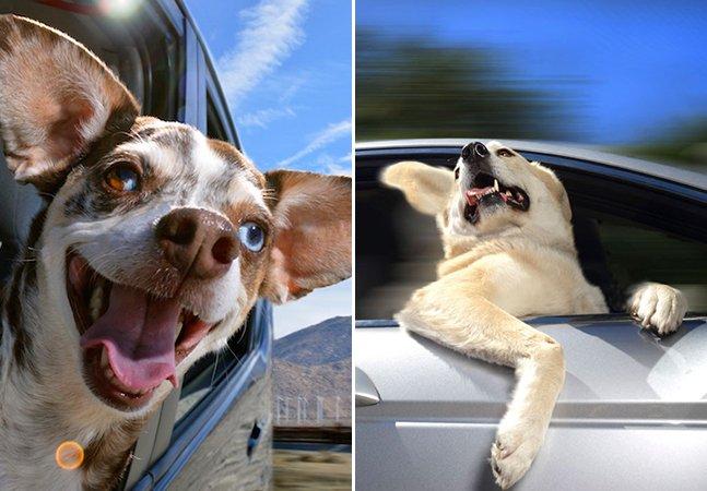 Série de fotos registra a felicidade de cães viajando nas janelas dos carros