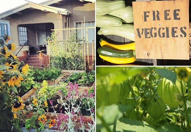 Homem transforma jardim em uma horta de dar inveja