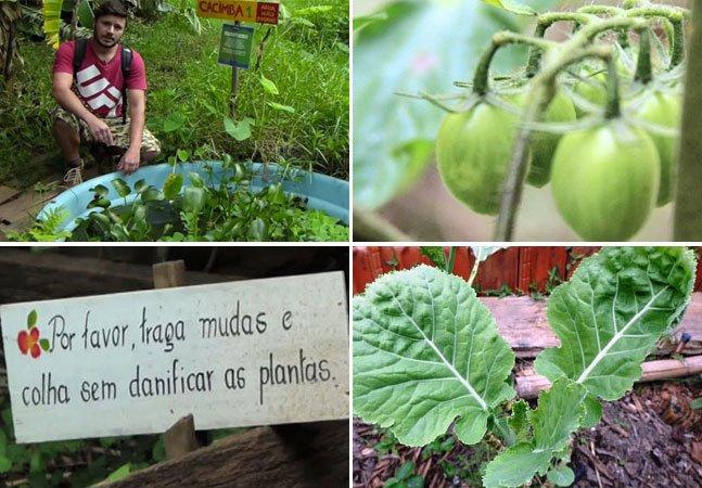 A horta comunitária que produz alimentos orgânicos em meio a metrópole de SP