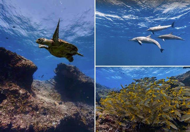 Google Maps permite mergulhar na beleza subaquática de Fernando de Noronha