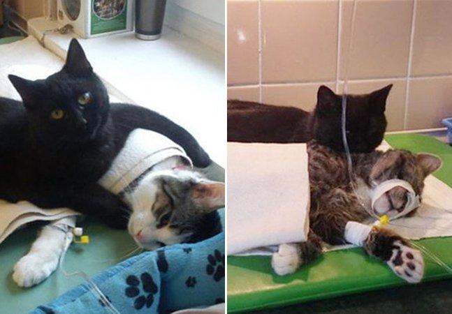 O gato que esteve à beira da morte e hoje cuida de animais em dificuldade