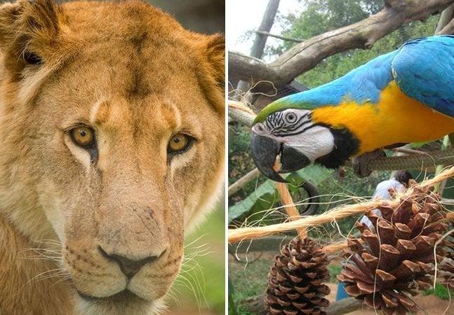 Conheça o santuário brasileiro que salva a vida de animais silvestres e exóticos que passaram por maus-tratos