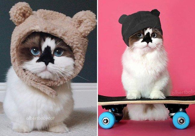 Gato estiloso faz sucesso no Instagram