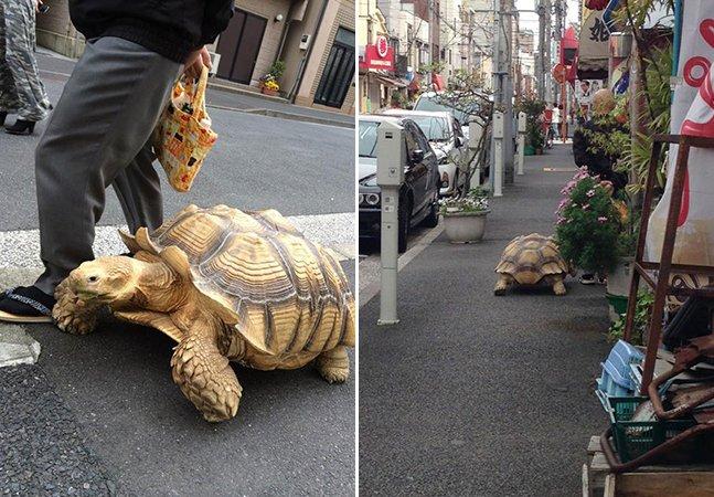 Japonês passeia pacientemente com seu pet inusitado: uma tartaruga gigante