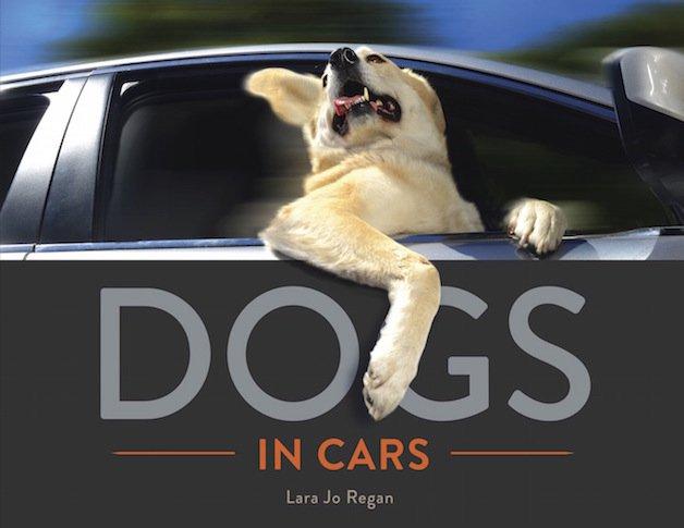 cachorro 11