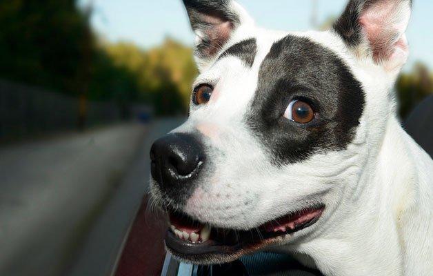 cachorro-18