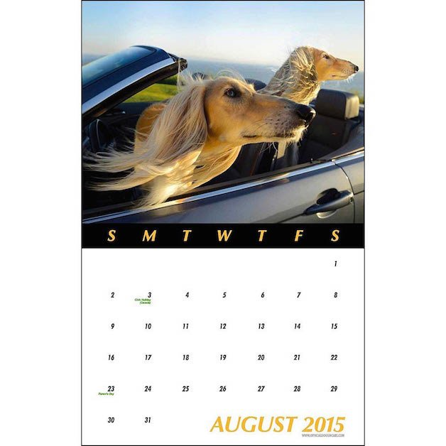 cachorro calendario 14