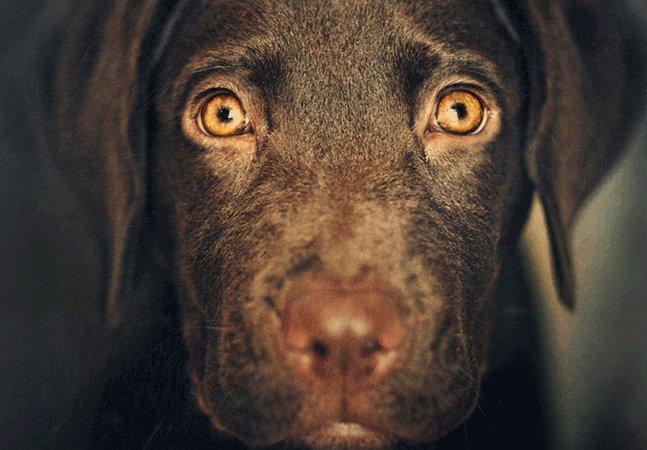 Estado australiano quer proibir a venda de animais em pet shops