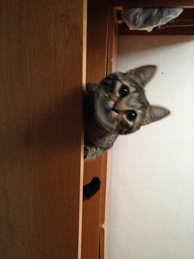gato-especial