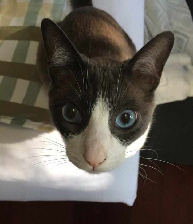 gato-especial10