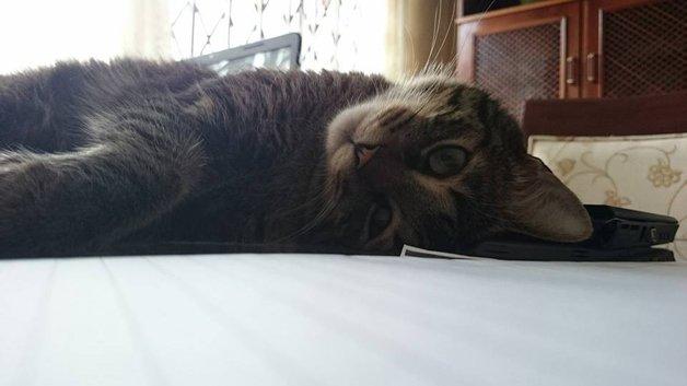 gato-especial2