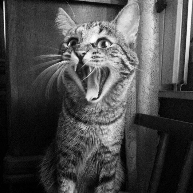 gato-especial3