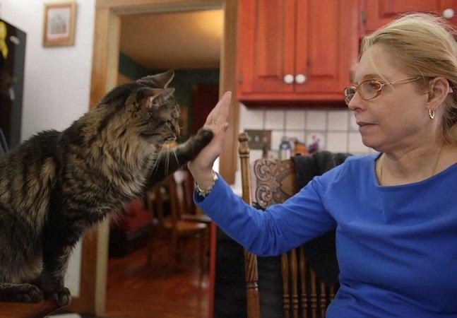 A deficiente auditiva que ensinou língua de sinais aos seus gatos
