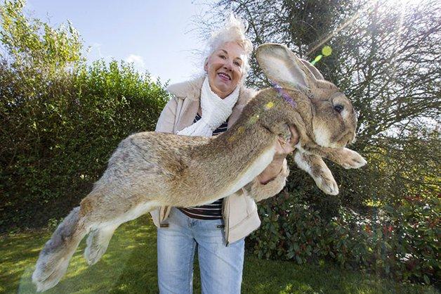 maior-coelho