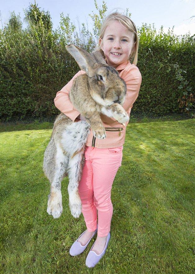 maior-coelho2