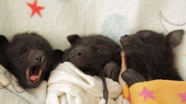 morcego3