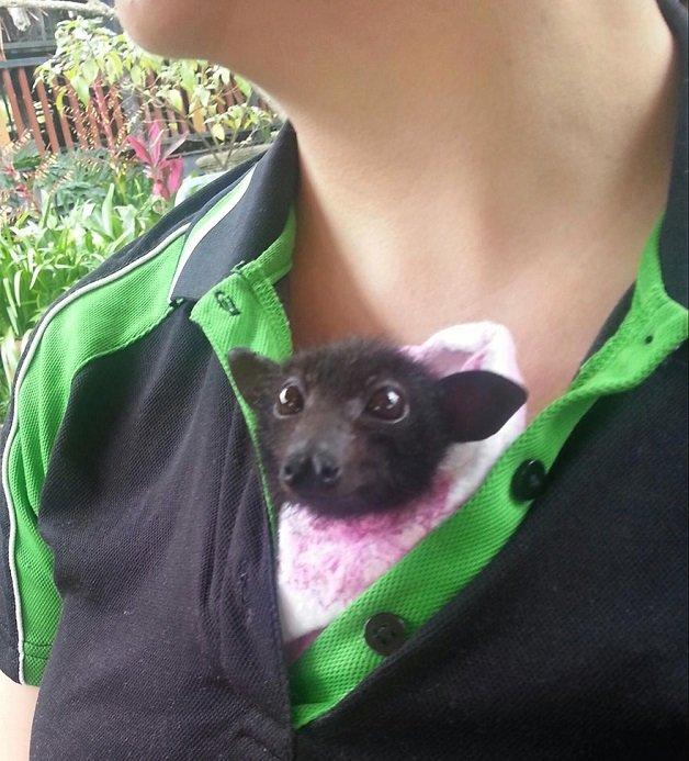 morcego8
