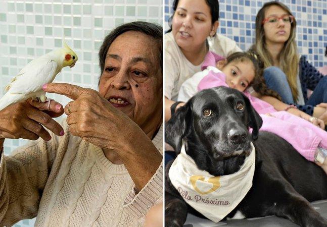 ONG leva animais a hospitais e casas de saúde do RJ para deixar pacientes mais felizes