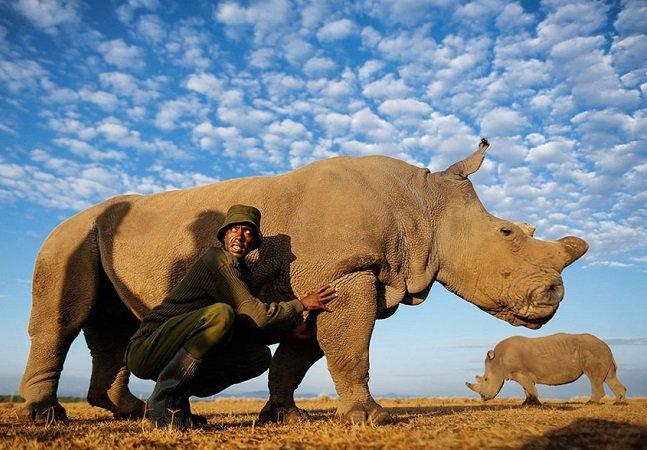 A luta para preservar a vida do último rinoceronte-branco presente na natureza