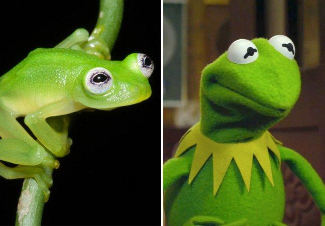 Vida imitando a arte? Cientistas descobrem espécie de sapo que se parece com o Caco dos Muppets