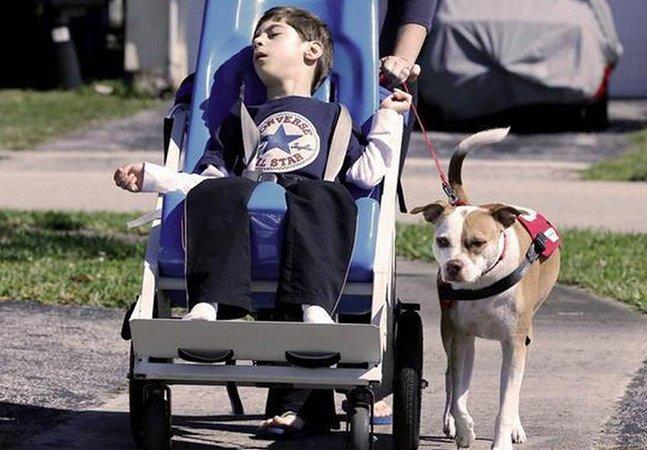 Criança com paralisia cerebral recebe autorização judicial para ser acompanha por seu pitbull na escola