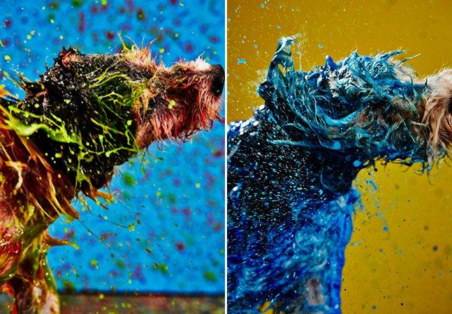 Cachorros bancam os artistas em ação criativa para incentivar a adoção