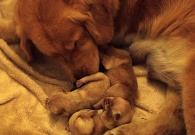 Como a conexão conseguiu tornar o parto desta cadelinha ainda mais especial