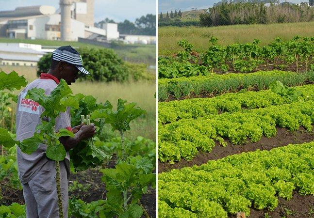 Horta urbana produz alimentos orgânicos para abastecer escolas e hospitais