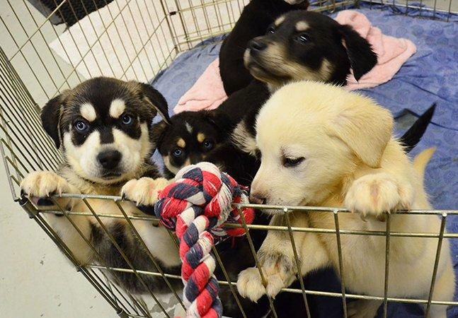 """Universidade cria """"sala dos filhotes"""" pra ajudar estudantes a eliminar o stress ao interagir com cachorros bebês"""