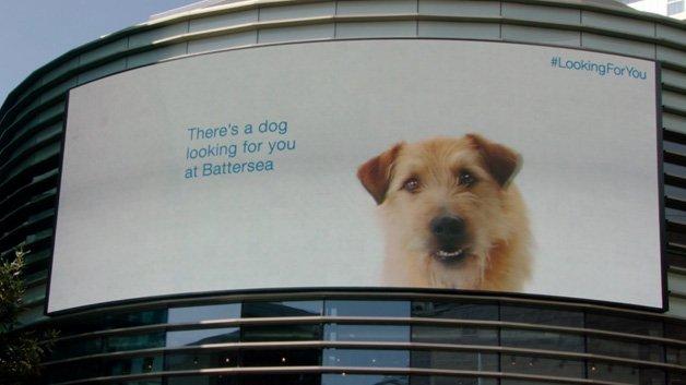 battersea-dogs19
