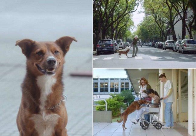 Campanha sobre doação de órgãos comove ao mostrar relação  de amor entre cão e seu dono