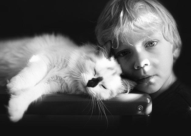 gatos-filhos10