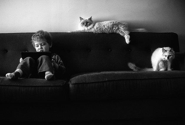 gatos-filhos14