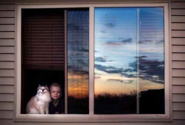 gatos-filhos26