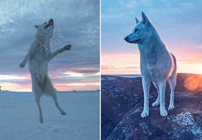 Do abrigo para o mundo: dono leva sua cachorra adotada para altas aventuras pela América do Norte