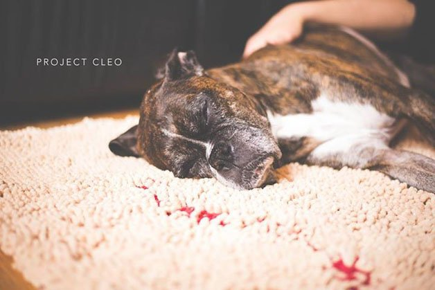 project-cleo