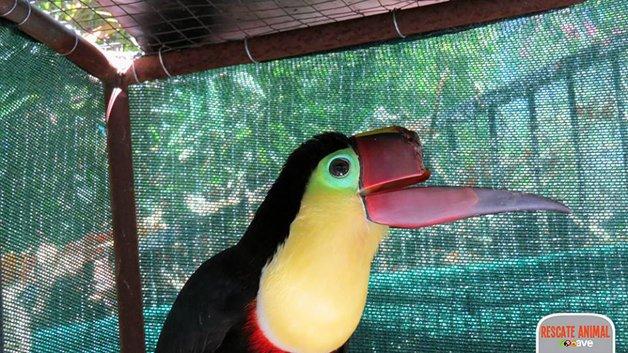 tucano-protese