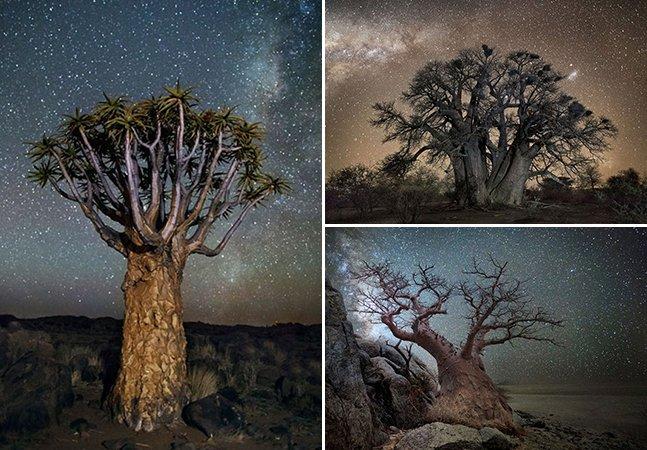 Fotógrafa viaja pela África para retratar as árvores mais velhas do mundo à luz do céu estrelado