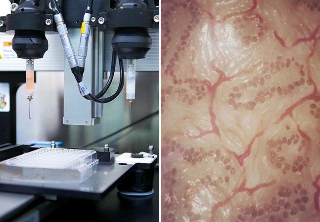 Pele criada por impressora 3D pode substituir animais em testes de cosméticos