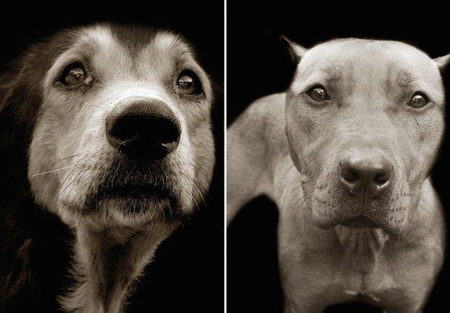 Série fotográfica capta a triste expressão de cães que aguardam para serem adotados