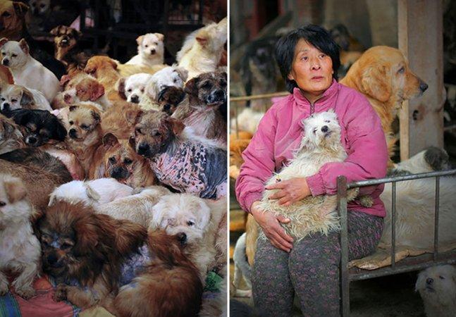 Como esta mulher salvou 100 cachorros que seriam sacrificados em festival na China