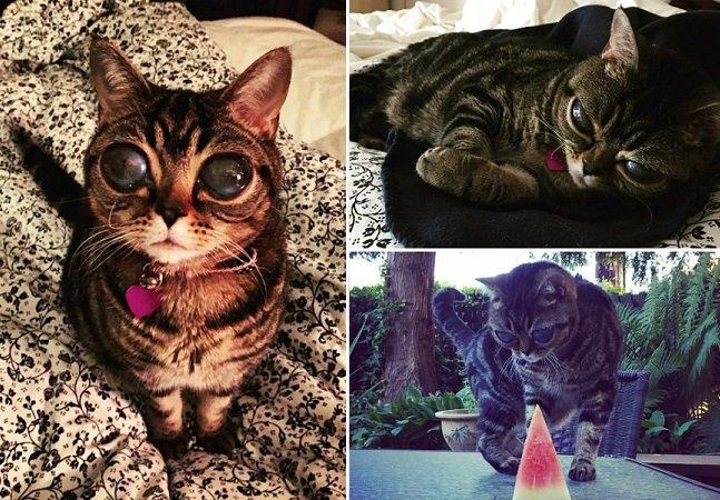 Condição rara deixa gatinha com incríveis olhos de extraterrestre