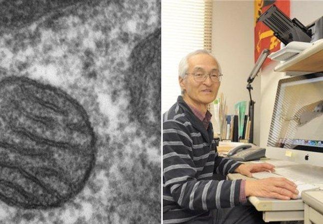 Cientistas descobrem forma de reverter o envelhecimento de células humanas