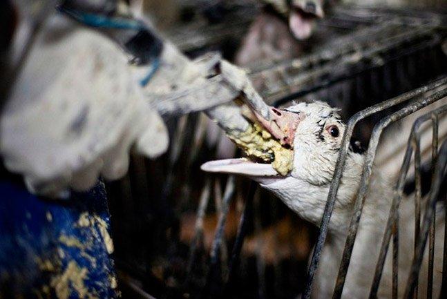 Prefeitura de SP proíbe produção e comercialização de foie gras na cidade