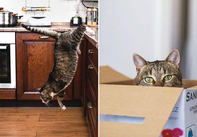 Fotógrafa clica gatos com deficiência para mostrar como eles continuam sendo incríveis